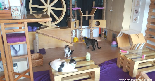 Cuteness Overload at Cat Cafe Manila
