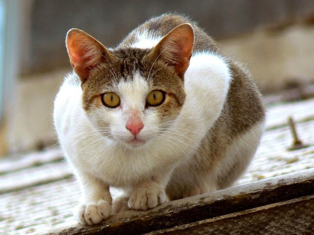 Verbo y penumbra: Gato