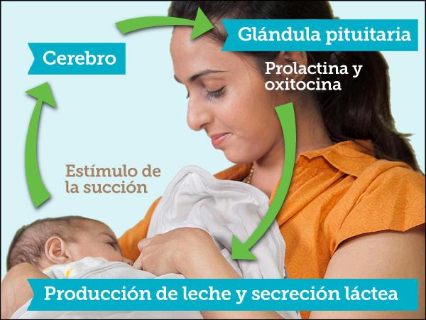 cemuvenezuela: MITOS DE LA LACTANCIA MATERNA