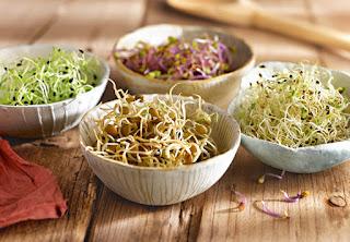 Brotes de Alfalfa, Germinados, Beneficios de los brotes de Alfalfa, Propiedades de los Brotes, Consejos de una alimentacion saludable,