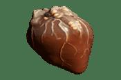 Mytocardia スポア