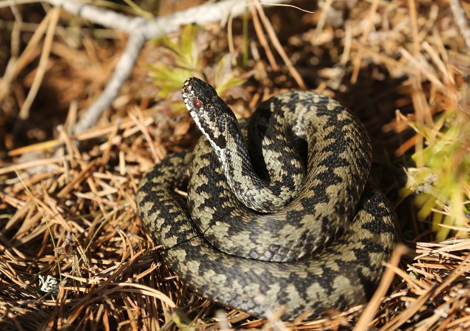 Kyy Käärme