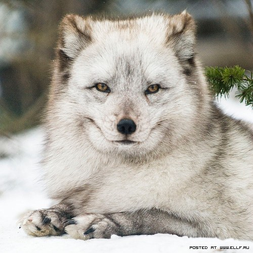 Daily Dose Of Cute Smiling Wolf