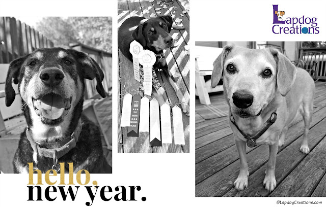 happy new year 2018 dogs rescue adopt