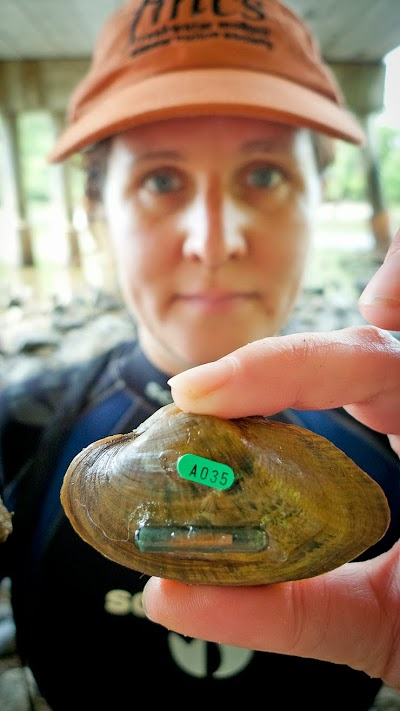 Michigan DNR's Fisheries Division works to protect endangered mussels