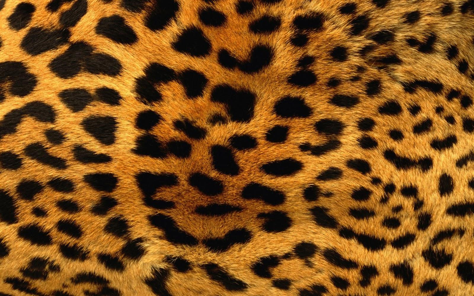 Patada De Caballo Fondos Animados: Patada De Caballo: Animal Print