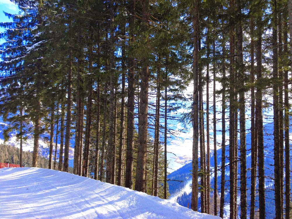Tree-lined slopes in Zell Am See, Austria