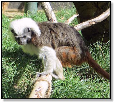 Tiere im Tierpark Köthen