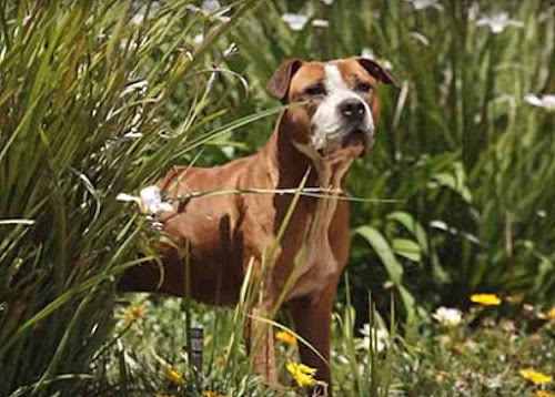 GR CH BLACKROCKS CHEYENNE 6XW BIS | SPORTING DOG NEWS