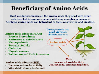 Easy Guide To Make Amino Acids and Knowing Benefits For Plants