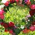 Σε λίγες μέρες η γιορτή των λουλουδιών στα Ψηλά Αλώνια - Δείτε πότε θα γίνει