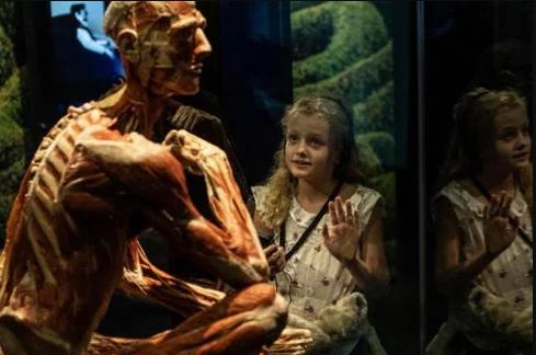 London Body Worlds suitable for all ages