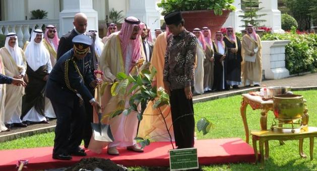 Ini Manfaat Pohon Ulin untuk Kesehatan yang ditanam Raja Salman