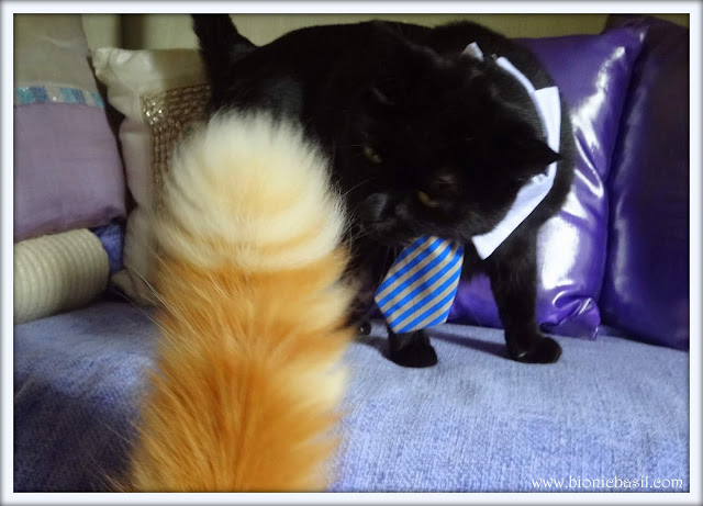 Friday Fluffers with The B Team @BionicBasil® Parsley's Best Blooper Week 2