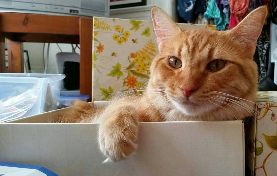 Kucing di dalam box