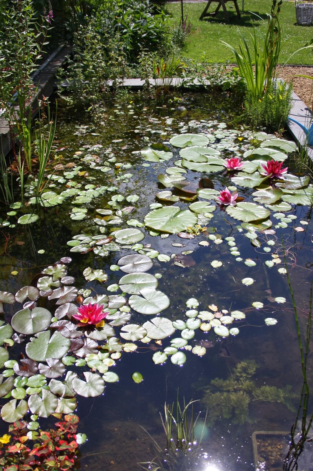 Tuin tirades vijveronderhoud is een eitje for Filter vijver schoonmaken
