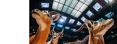 http://bessol-photographe.blogspot.fr/p/grande-galerie.html