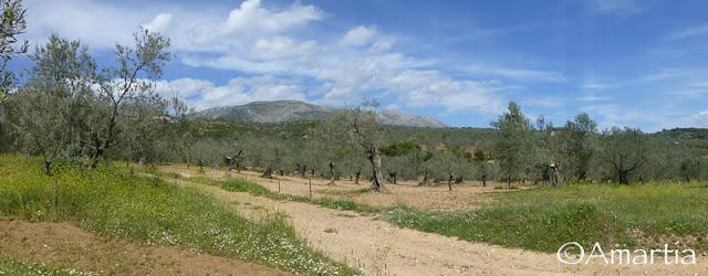Argolide Peloponnese Grèce
