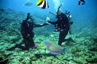Caribbean cruise st.maarten prescott travel agent