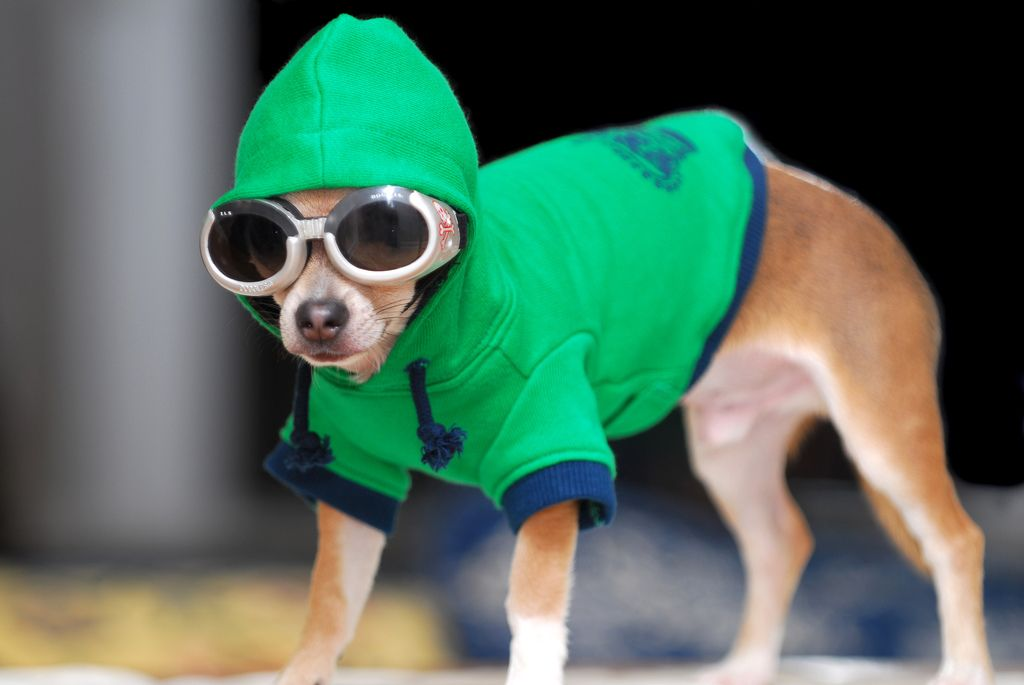 33. Dog in the Hood by Kendall