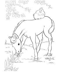 Cute Baby Horse Eatting Grass Coloring Pages