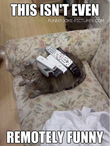 Funny Cat Animal Photo