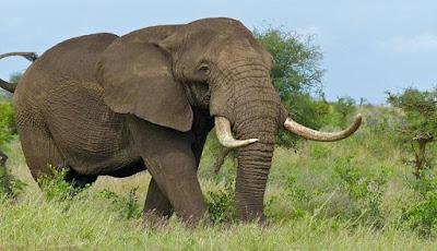 Ternyata, Gajah Lebih Cerdas Dari yang Kita Duga