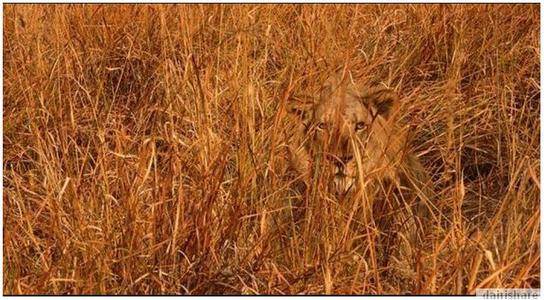 Gambar Haiwan Tersembunyi Sebalik Alam Semulajadi Dairishare Binatang