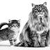 Ketahui 10 Bahasa Tubuh Kucing Ini