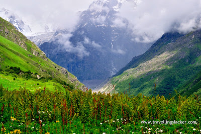 Beauty of the Valley of Flowers in Uttaranchal