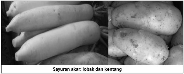 Sayuran akar - lobak dan kentang - Sayuran akar (root vegetables) - Jenis Sayuran Berdasarkan Bagian Tanaman yang Dimakan