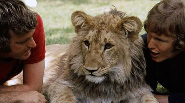 Christian the Lion - An awesome friendship between humans and animals