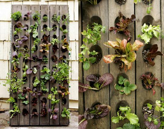 Wish Wednesdays: Indoor Wall Planter For Herbs