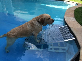 rampas para câes saírem de piscinas