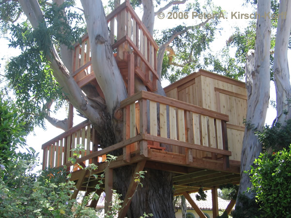 Beautiful Wooden Tree House Style Pictures Drotesi