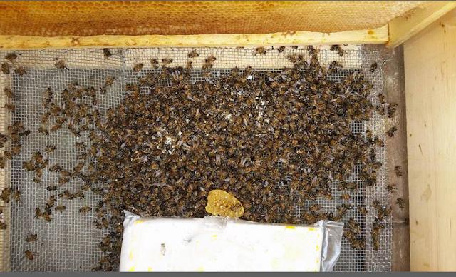 Χειρισμοί για ανοιχτούς πάτους μελισσιών στο κρύο: Εμπειρίες παλιών και μερικοί κίνδυνοι...