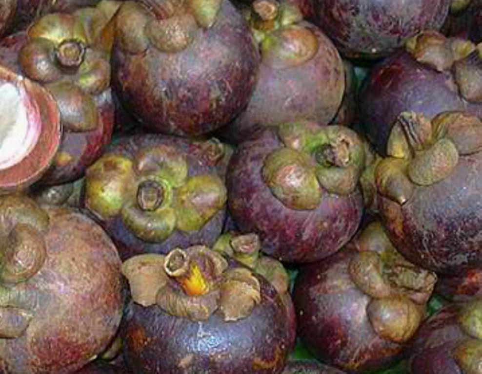 Organic Dye Batik