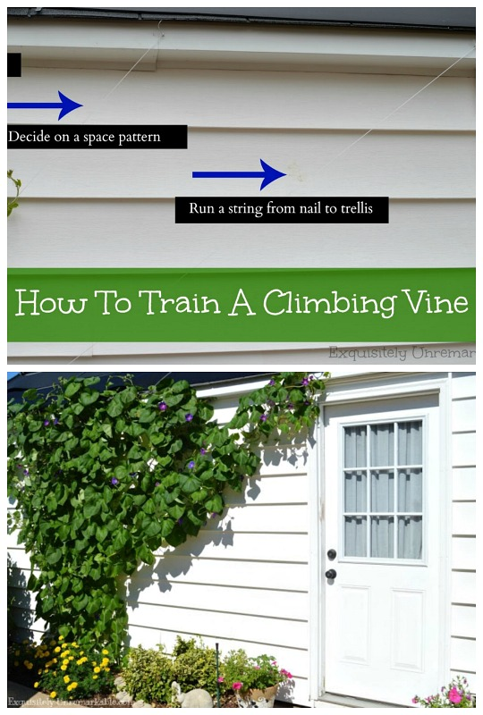 Training Your Vines On A Trellis