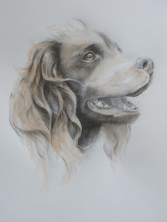 Hopetoun's Elixir, graphite drawing, mixed media painting, springer spaniel, Hopetoun Horse Trials