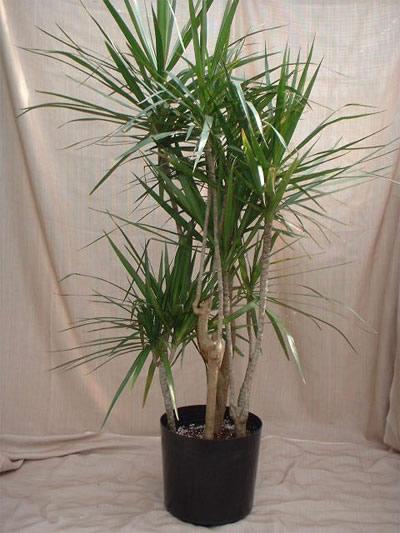 Viaţa are gust: 4 plante de apartament care purifica aerul