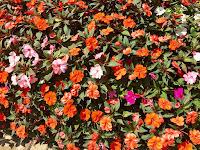 Flores no Parque Amantikir em Campos do Jordão