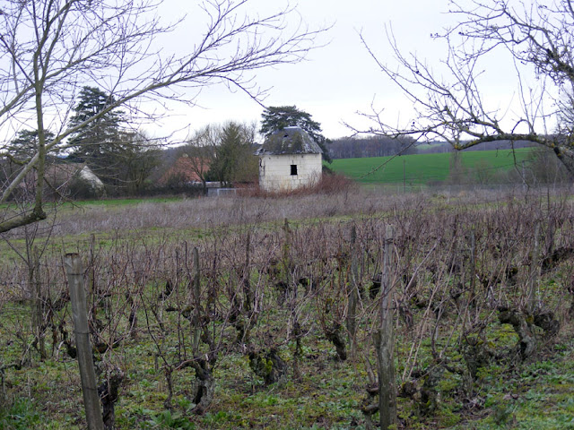 A small plot of Coeur de Francais grape vines.  Indre et Loire, France. Photographed by Susan Walter. Tour the Loire Valley with a classic car and a private guide.