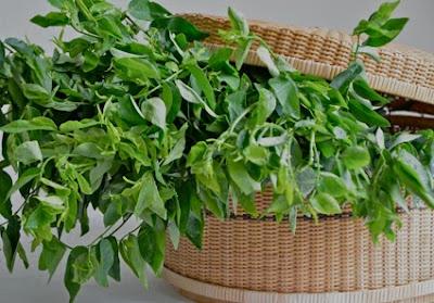 sayuran penambah asi