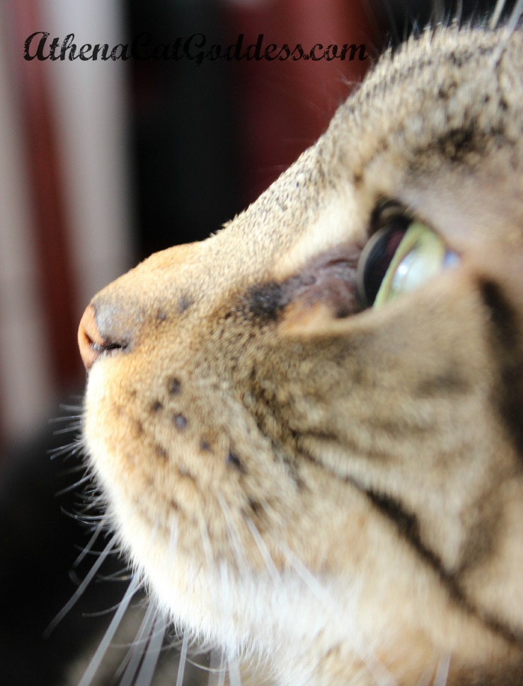 macro photo of cat in profile