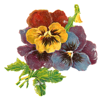 flowers art floral wildflower pansy botanical illustration clipart