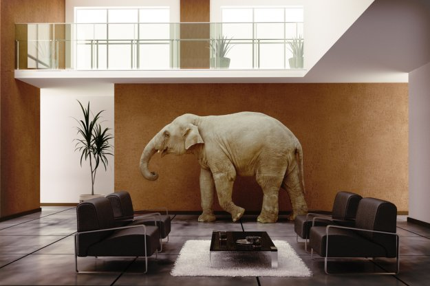 Ο... ιταλικός ελέφαντας μπήκε στο δωμάτιο