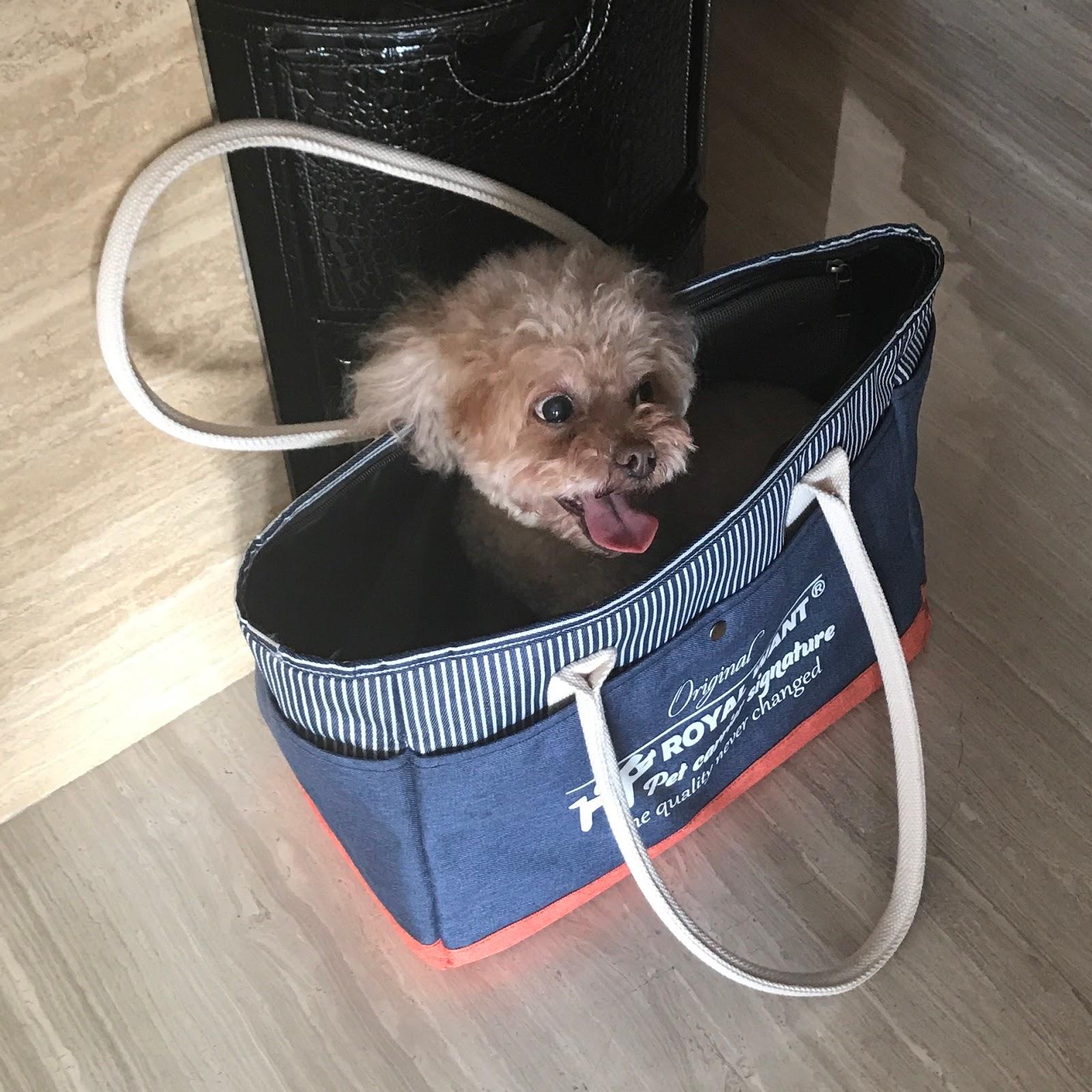 Kiinassa Syödään Koiria