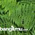 Ciri Ciri dan Reproduksi Pteridophyta (Tumbuhan Paku)