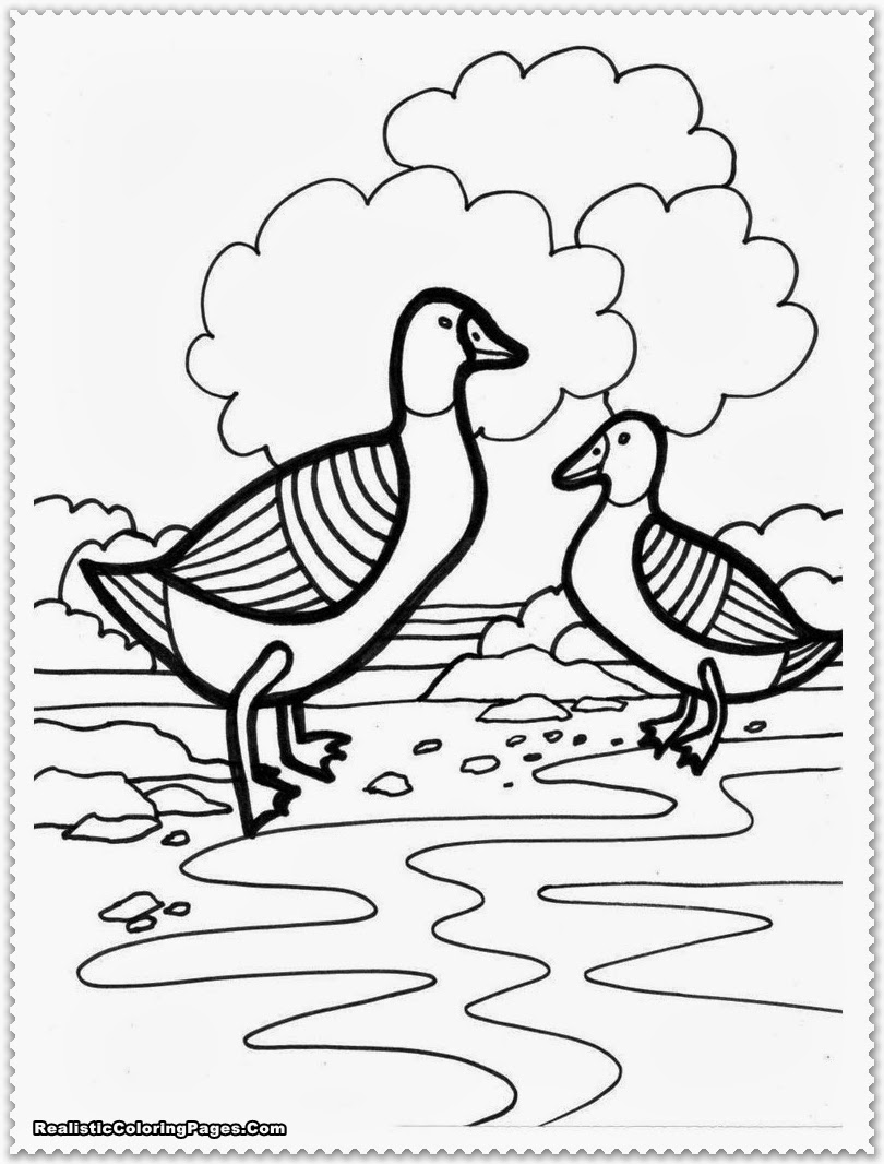 farm animal coloring pages realistic coloring pages farm animal