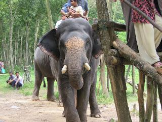 Elephant Ride at Bangabandhu Safari Park